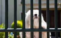 How To Find the Best Fence For Your Pet in Colorado