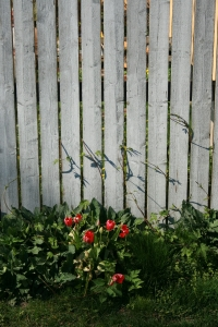 Should I repair or replace my fence?